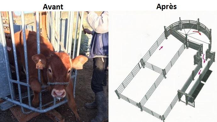 cage contention et corral de contention