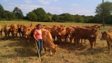Meilleure contention = plus de bien-être etsécurité pour les vaches et éleveurs