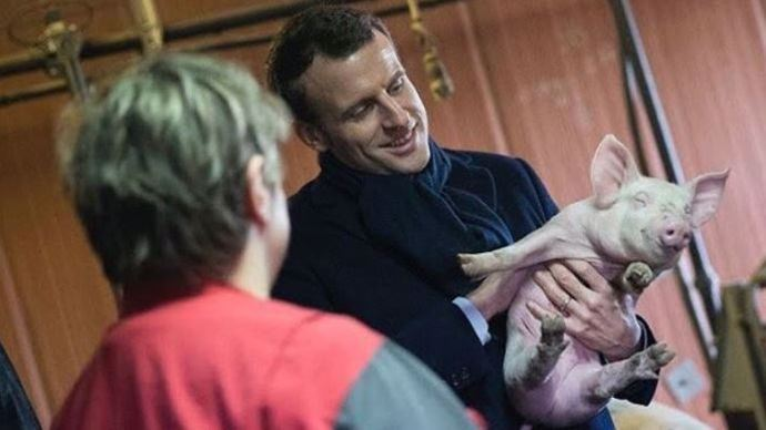 Emmanuel Macron; cochon