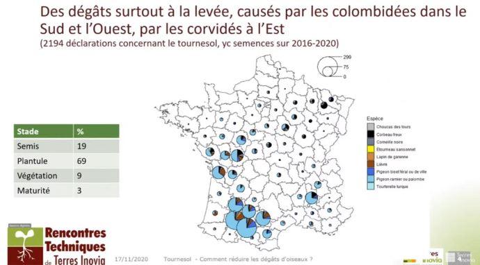 Dégâts d'oiseaux signalés sur les oléo-protéagineux en France en 2020