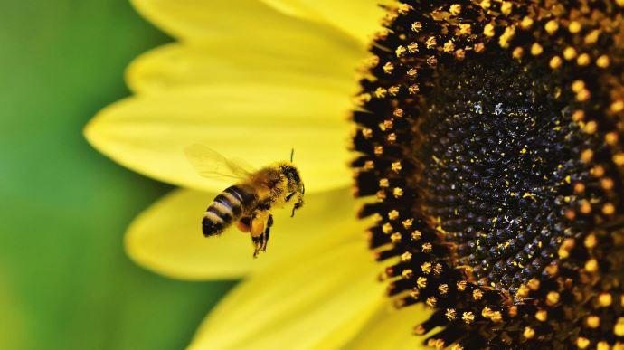 Le plan pollinisateurs devrait être soumis fin mars à la consultation publique.