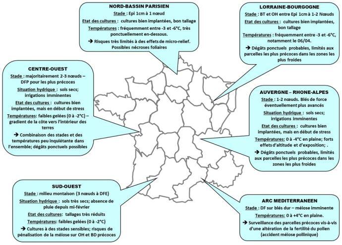 Situation des céréales à paille dans différents bassins de production
