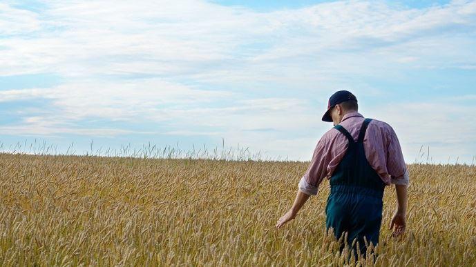 agriculteur dans un champ de ble