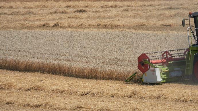 Alors qu'au 5 juillet, seulement 1% des blés tendres étaient récoltés, le rendement moyen est envisagé par les services du ministère de l'agriculture à 75,1q/ha.