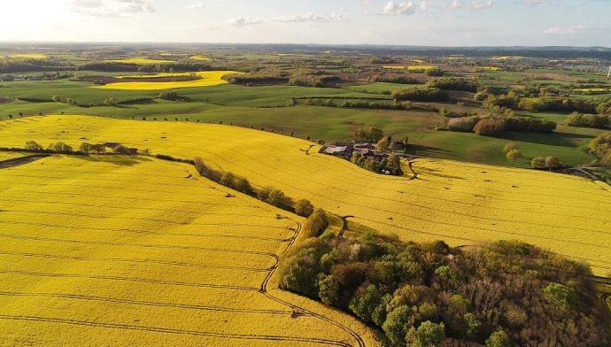 Paysage et champs de colza