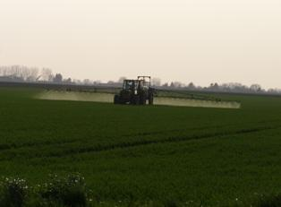 Quand appliquer les fongicides sur le blé ?