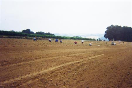 Appel de l'Osce à lutter contre l'exploitation des saisonniers agricoles