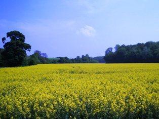 La balance commerciale des graines oléagineuses devient déficitaire