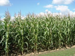 La « Corn Belt de l'Est» et l'Argentine à l'honneur du Demeter 2010
