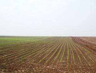 Les semis de maïs aux Usa devraient s'intensifier