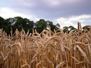 A l'approche des premières récoltes, les conditions climatiques animent les marchés