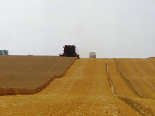 Les opérateurs surveillent les conditions de récolte