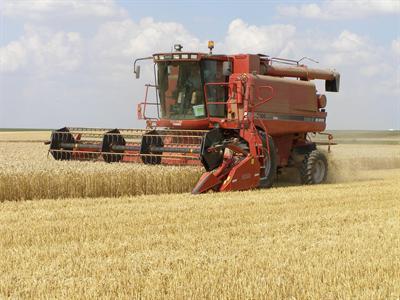L'envolée des prix du blé devrait se calmer