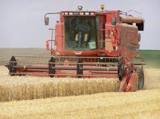 Prises de bénéfices sur le blé et le maïs