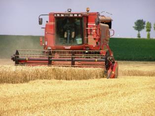 En suspendant ses exportations de blé, la Russie compromet la croissance mondiale selon Momagri