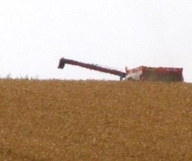 Repli des prix du blé face aux craintes que la demande s'essouffle