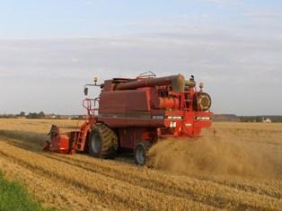 Des cours du blé à 300€/t ne sont pas à exclure en 2011