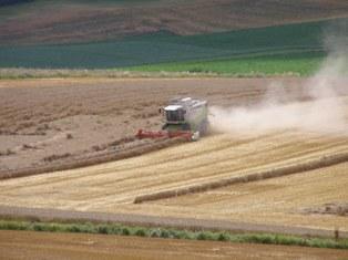 Le cours du blé au plus haut depuis août 2010
