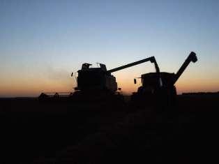Nouveaux sommets pour les prix du blé, du soja et du maïs