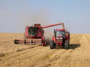 Bond des prix du blé après un avertissement de l'Onu