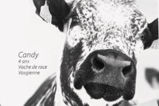 48ème édition du Salon de l'agriculture avec des éleveurs à la peine