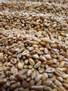 Net rebond des prix du soja et du maïs, plus modeste pour le blé