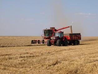 Maïs, blé et soja progressent