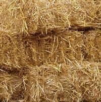 Les conseils de l'institut de l'élevage « pour anticiper et réagir » face au manque de fourrage