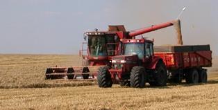 31 Mt de blé avec des rendements en recul de 15 % par rapport 2010