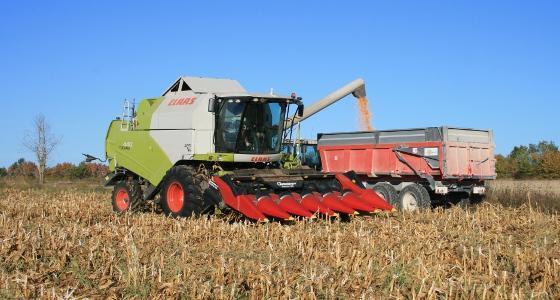 Dégringolade du maïs, du blé et du soja après des rapports aux Usa
