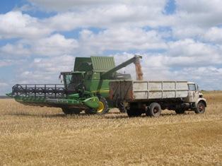 Maïs et blé chutent, les perspectives d'offre s'améliorent
