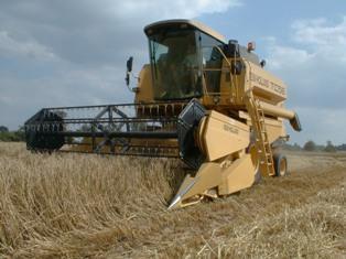 Le maïs se replie sous l'effet d'un temps moins menaçant aux Usa