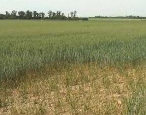 11 nouveaux départements reconnus au titre des calamités agricoles