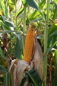 Arvalis-Institut du végétal : « Un fourrage très rentable s'il est bien récolté et conservé »
