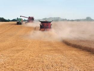 La production mondiale de maïs et blé devrait atteindre un record en 2011/2012