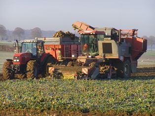 La filière betterave se mobilise contre la réforme européenne du marché du sucre