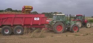 Les producteurs français de pommes de terre s'inquiètent de la baisse des prix