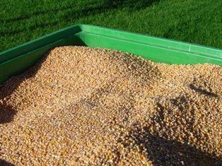 Le maïs américain sur la touche