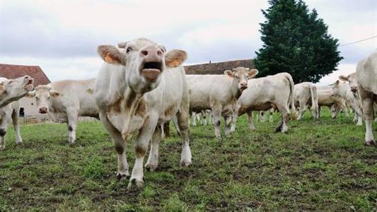 En l'absence d'une « Pac régulatrice », les éleveurs de la CR sont inquiets
