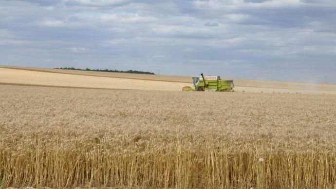 Récolte d'une parcelle de blé dur.